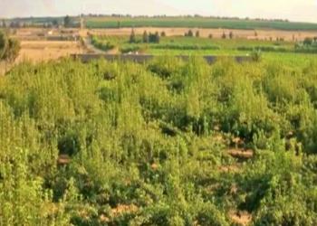 استثمروا بصحراء مصر وحولوها جنة.. فاستولى عليها الجيش (فيديو)