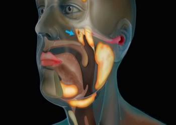 علماء يكتشفون عضوا جديدا في جسم الإنسان.. تعرف عليه