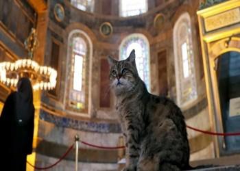 نعاها رواد آيا صوفيا.. وفاة القطة الشهيرة غلي