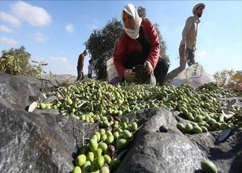 للمرة الأولى.. غزة تصدر زيت الزيتون إلى السعودية والإمارات