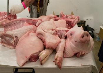 هل تحتوي لقاحات كورونا على جيلاتين الخنزير؟