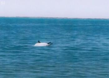 التحالف العربي يعلن تدمير 5 ألغام بحرية جنوبي البحر الأحمر