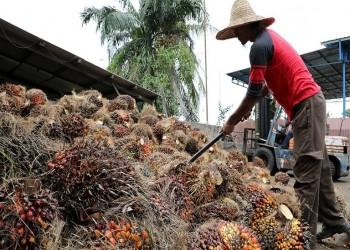 الولايات المتحدة تحظر الواردات من ثاني أكبر منتج لزيت النخيل في ماليزيا