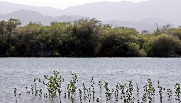 ضغوط متزايدة على دول الخليج من أجل مشاركة فعالة في أزمة المناخ العالمية