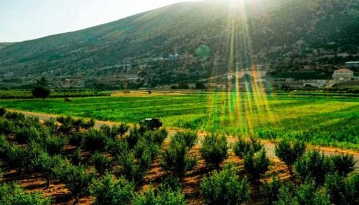 على وقع الانهيار الاقتصادي غير المسبوق..  لبنانيون يلجأون إلى زراعة الحشيشة