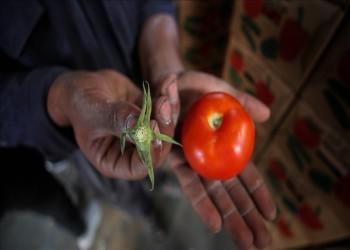 إسرائيل تشترط إزالة عنق الطماطم لتصديرها من غزة للضفة