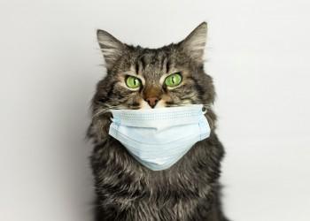 القطط أكثر قابلية للعدوى بكورونا من الكلاب.. لكن لا تتعجل في الفزع