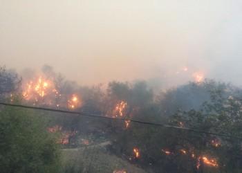 أربعة قتلى جراء حرائق الغابات في الجزائر (صور وفيديو)