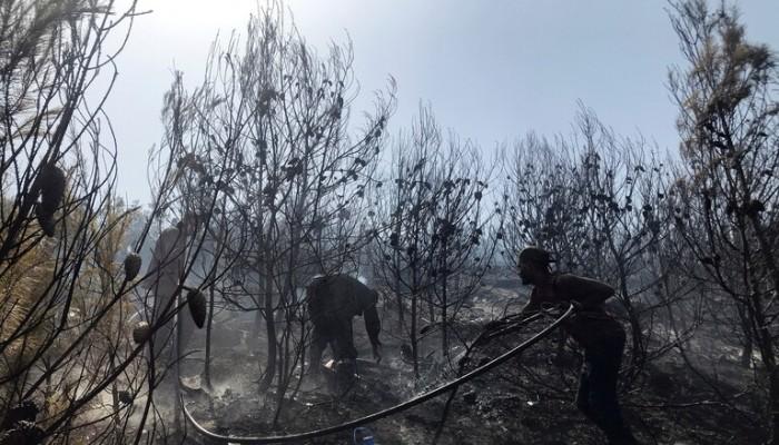 الجيش الجزائري: المغرب متورط في إشعال حرائق الغابات